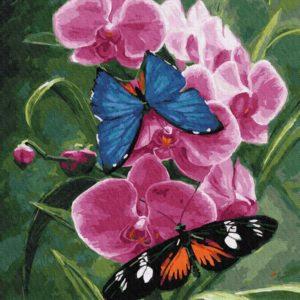 Pictura pe Numere EX5849